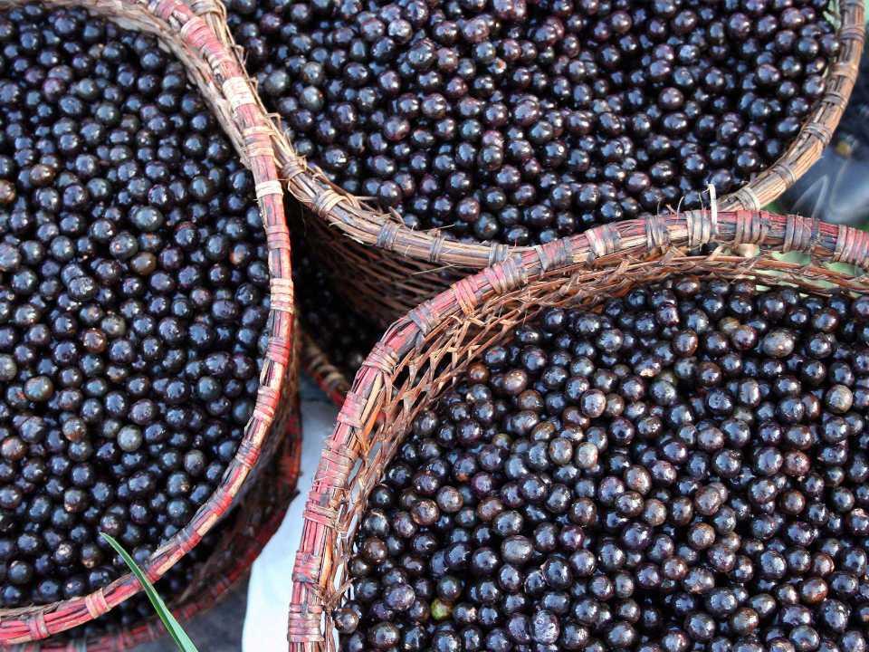 aminokwasy w jagodach acai