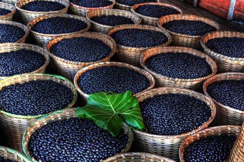 ekologiczne jagody acai